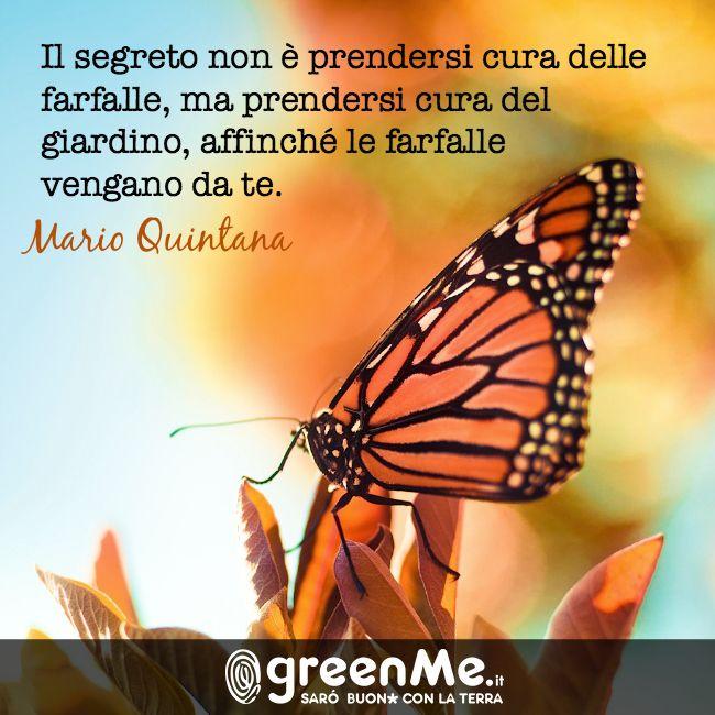 """""""Il segreto non prendersi cura delle farfalle, ma prendersi cura del giardino affinché le farfalle vengano da te"""" Mario Quintana http://www.greenme.it"""