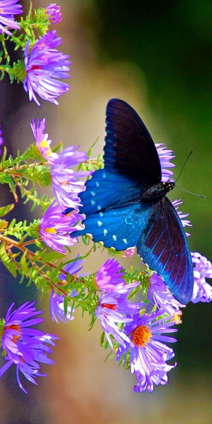Beautiful deep blue butterfly taking flight from flora