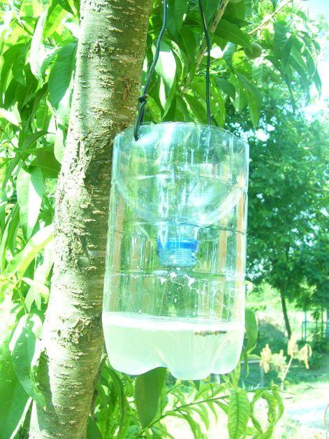 Rovarcsapda: cukros viz vagy egy kevés sör felhígítva vízzel,szúnyog esetén egy kevés élesztővel