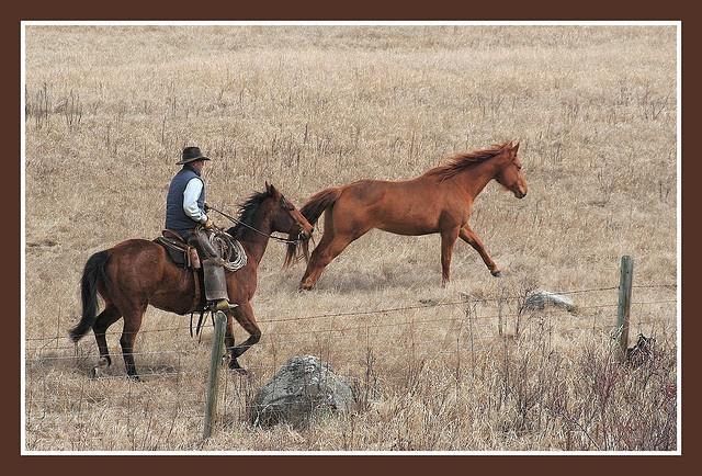 Cowboy near Williams Lake, BC. by abbenquesnel, via Flickr