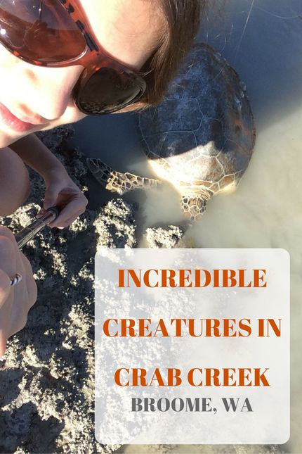 Incredible Sea Creatures At Crab Creek - Be Yourself by Charlie