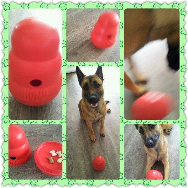 Spel 31 (hondenspel hond spel denkwerk hersenwerk brain dog game play diy) www.facebook.com/denkspellenvoorjehond