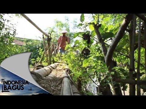 ▶ Indonesia Bagus - Brebes - Tegal - YouTube