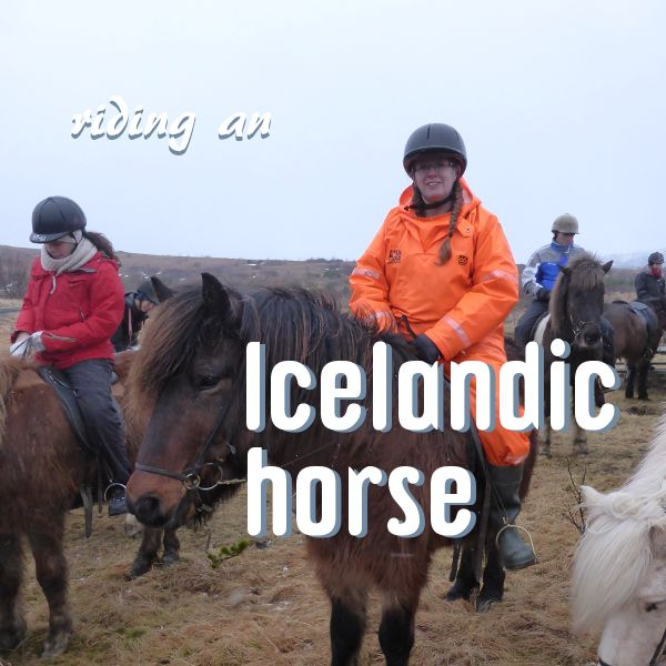 I'm not a horse rider. I know which end bites and which end kicks and that's about the limit of my horse knowledge. But horse riding is one of the most popular activities you can in Ice…