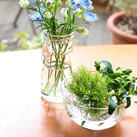 窓越しの日差しが、ガラス瓶に反射して緑がきれい♪    #朝 #花 #flowers #心地よい暮らし #暮らしの道具 #心地よい暮らしの道具店yutorino #緑 #グリーン #green #garden #庭 #ガラス #植物 #春