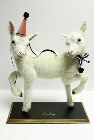 LES DEUX GARÇONS ; Odd taxidermy birthday goats taxidermy conjoined twins