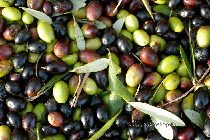 Nel caso di miscele con altri oli vegetali, l'indicazione di presenza di olio d'oliva è permessa solamente se il suo contenuto è superiore al 50%; ...