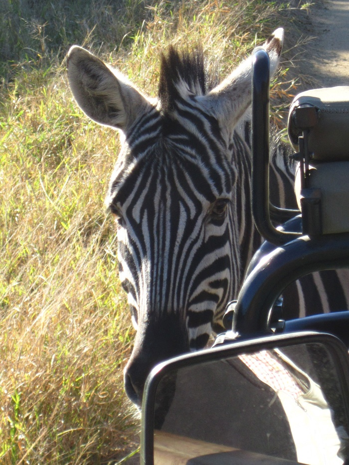 Hoedspruit ESC, South Africa