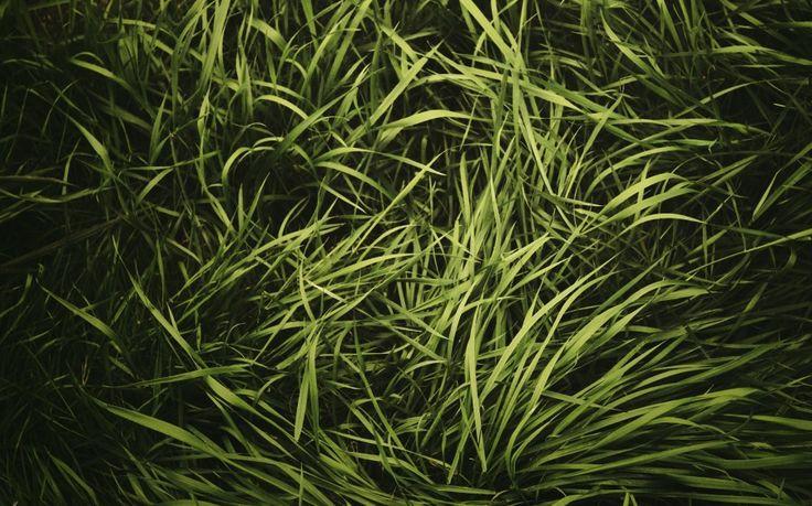 Green Grass Texture Vignette Free Wallpaper HD