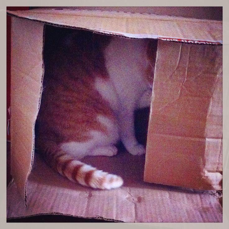 Alexa en su caja de cartón ❤️ #gata #caja #kitty #box