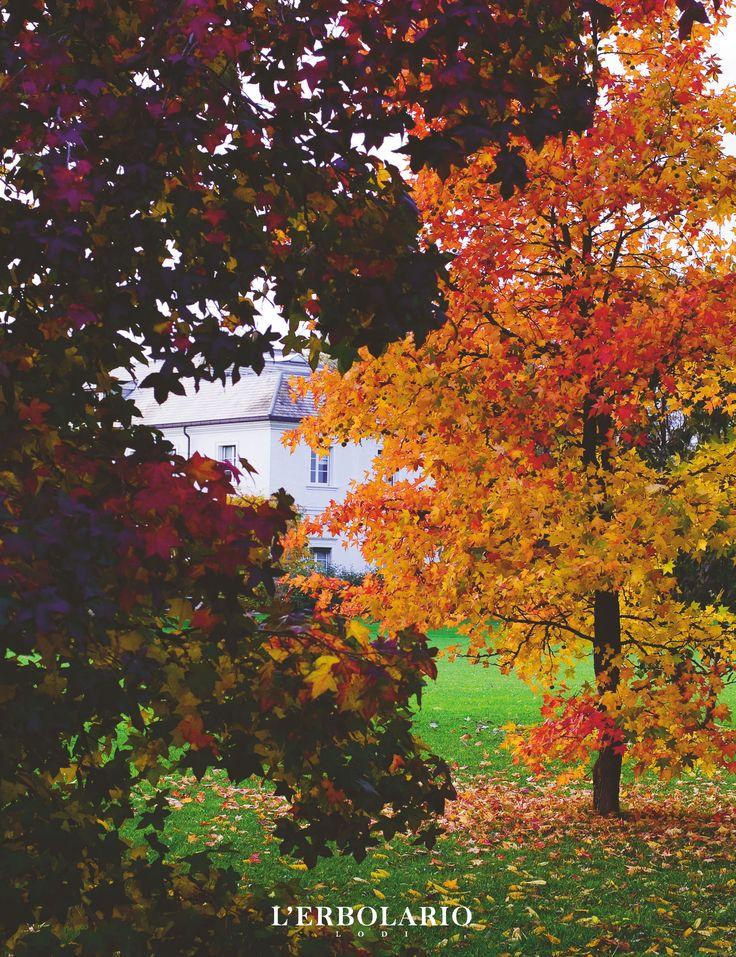 Colori d'autunno a L'Erbolario