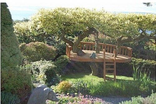 .Adult Treehouse, Front Yard Gardens, Treehouse Decks, Tree Houses, Trees House, Kinda Trees, Trees Patios, Trees Decks, Cubbies House