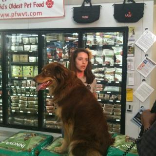 Pet Food Warehouse South Burlington Vermont