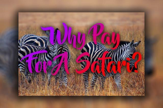 Why Pay For A Safari At Nairobi National Park - http://exploramum.com/2017/09/pay-safari-nairobi-national-park.html