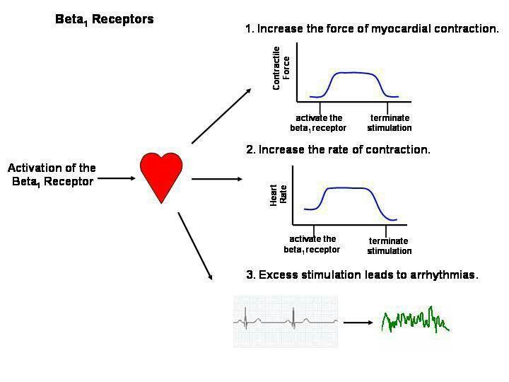 Beta receptors