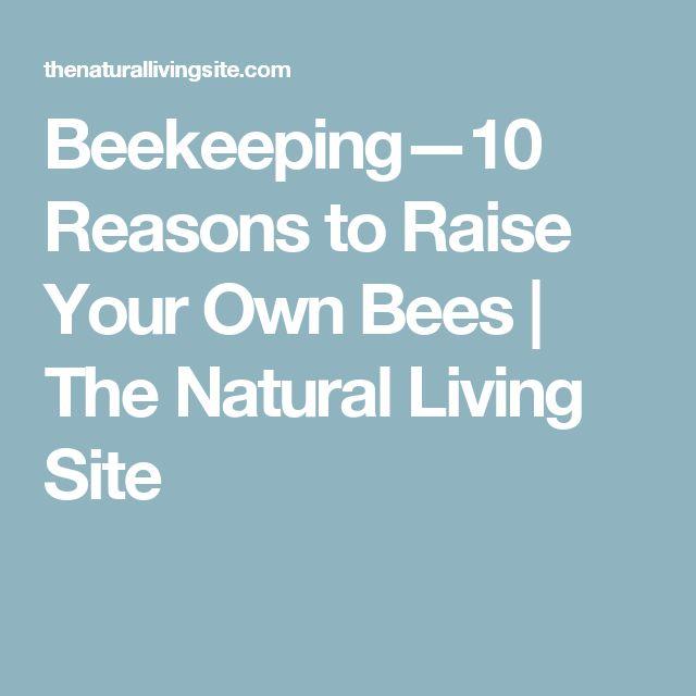 beginners on pinterest beekeeping backyard beekeeping and bee hives