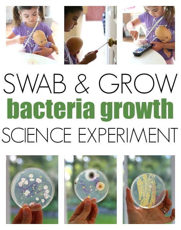 bacteria science fair projects