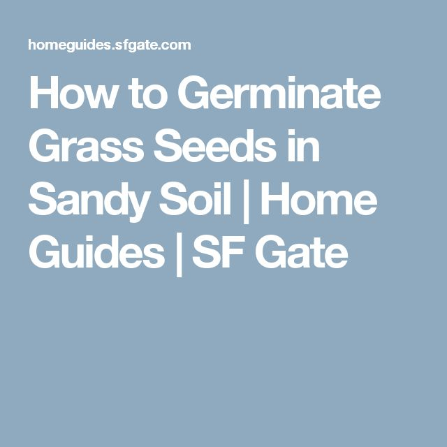 How to Germinate Grass Seeds in Sandy Soil | Home Guides | SF Gate