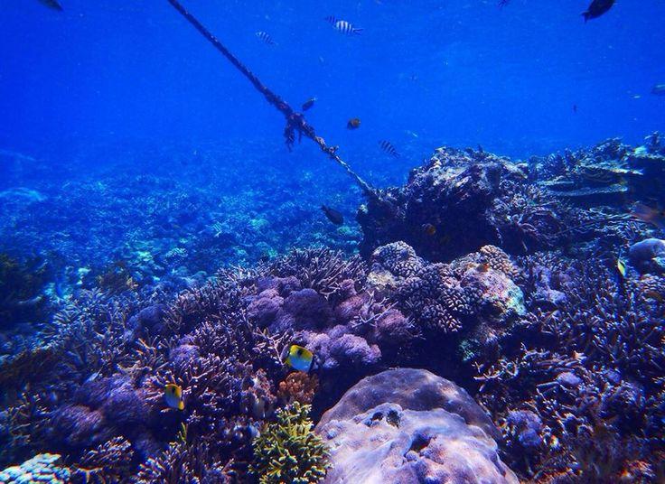 Mermaid life - Bali