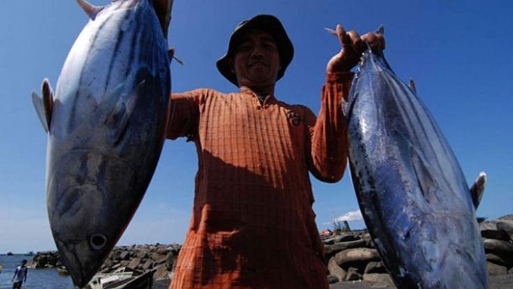 Ekspor Tuna Bali Melonjak Jadi US$643 Juta Karena Penguatan Dolar