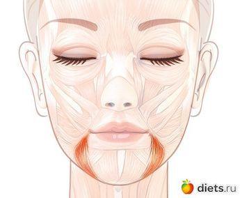 Поднимаем уголки губ: упражнение «Улыбка»: Фейскультура: методы естественного омоложения: Группы - diets.ru