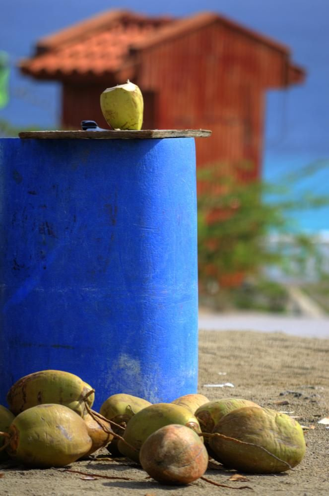 Coconut Still-life with Drum by kersten.conway
