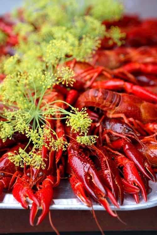 Crayfish party in Sweden - I would love to go to one...