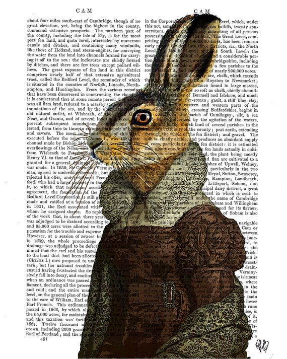 Madam Hare Portrait Rabbit Art Print Digital Illustration Hare Print Hare Illustration wall art wall decor Wall Hanging bunny
