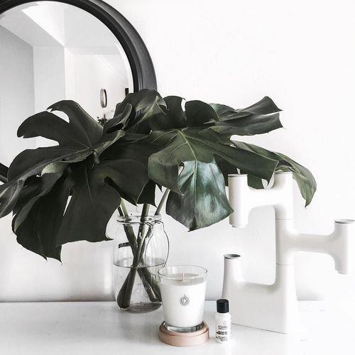 Image de details, plant, and style