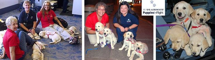 Last week Roscoe, Tess, Maple and Poppy arrived in Vancouver to begin service dog training with Canadian Guide Dogs for the Blind. Special thanks go out to our 7 employee volunteers who coordinated their schedules and navigated the puppy foursome through 4 flights beginning in Ottawa. Happy #PuppyMondays!