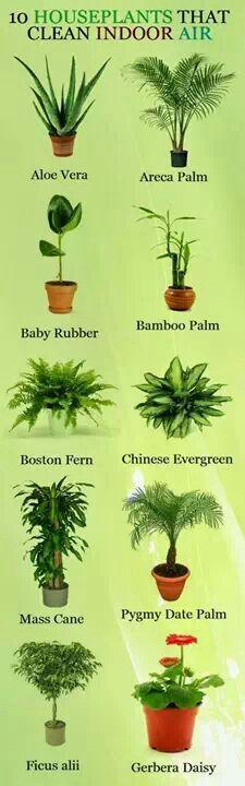 Plants that clean the air inside.
