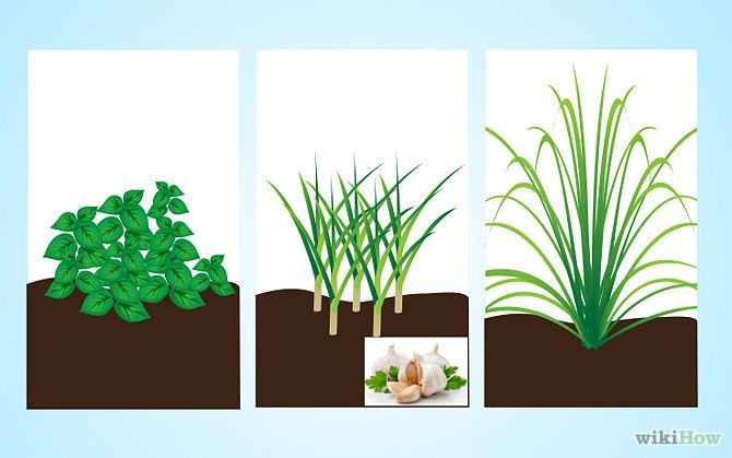 Use plants to keep mosquitoes away the o 39 jays for Best plants to keep mosquitoes away