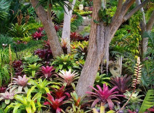 1000 ideas about jardines tropicales en pinterest for Jardines pequenos tropicales