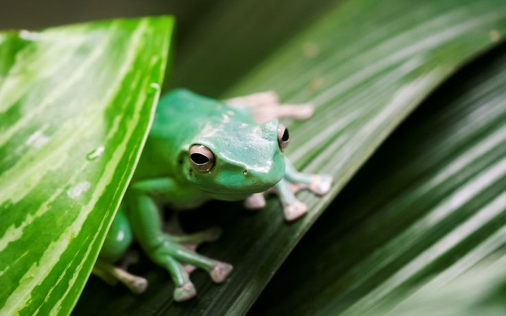 tree frog pic - Full HD Backgrounds, Windell Brian 2017-03-10