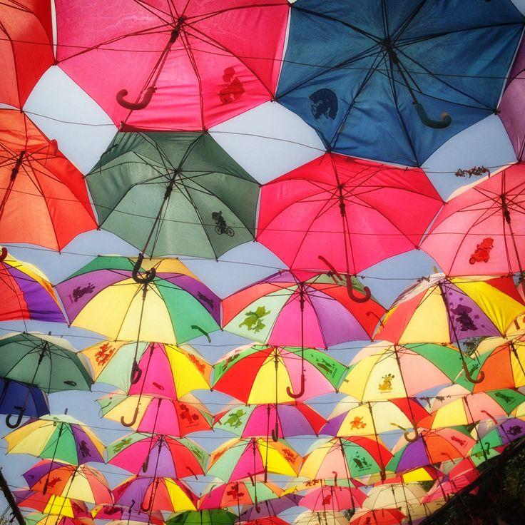 less popular dubai attractions - miracle garden