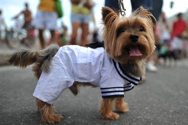 Super cute carnival dog!
