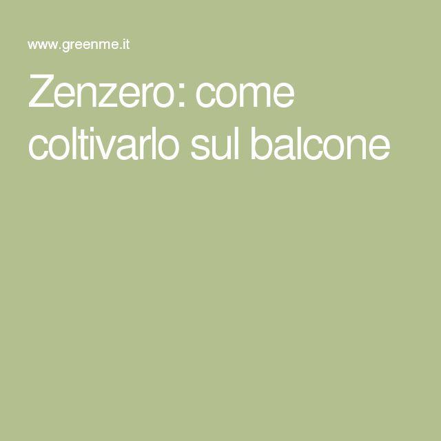 Zenzero: come coltivarlo sul balcone