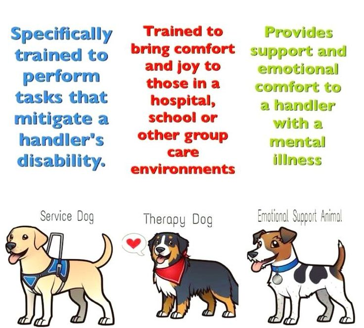 "gooddogautismcompanions: "" Ever wonder the difference between a service dog, therapy dog & an emotional support dog? This graphic explains. Good Dog Autism Companions are service dogs that help mediate the disability of autism. (Credit/author..."