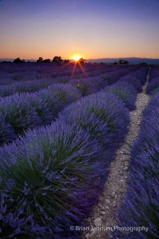 Coucher de soleil sur un champ de lavande, près de Valensole, Provence, France