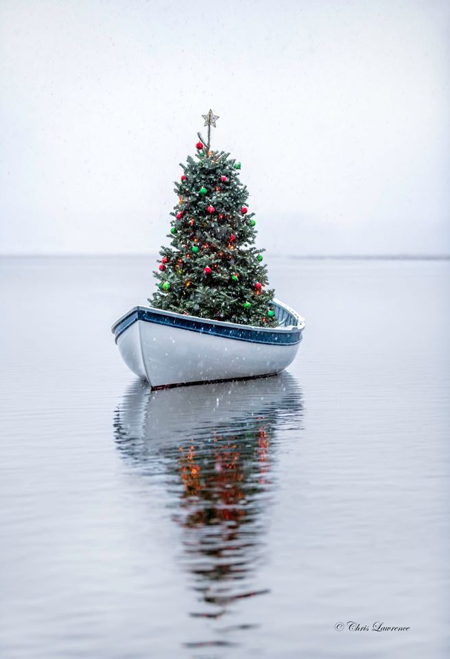 Maine Photography Bella Nieve I Outfitted My 14 Maine Peapod With A Beautiful Christmas Tree And Ba In 2020 Christmas Tree Beautiful Christmas Trees Holiday Decor