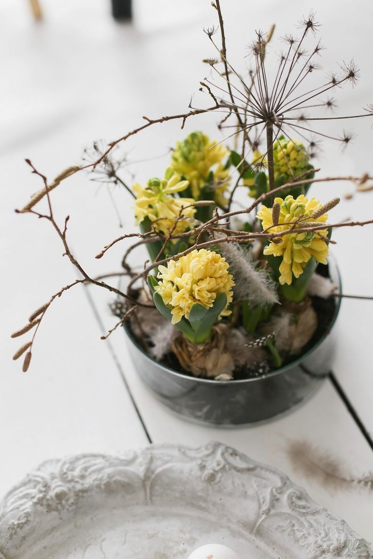 KUKKALA @huiskula #hyasintti #hyacinth
