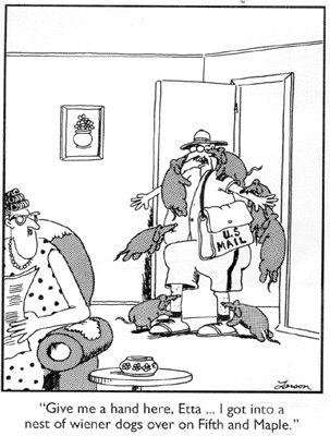 Far Side: nest of weiner dogs!!!