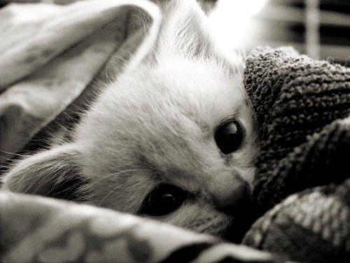 Sleepy Kitty: Cats, Kitty Cat, Cuteness, Animals, Sweet, Adorable, Things, Kittens, Kitties