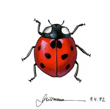 Realistic ladybug drawing - photo#5