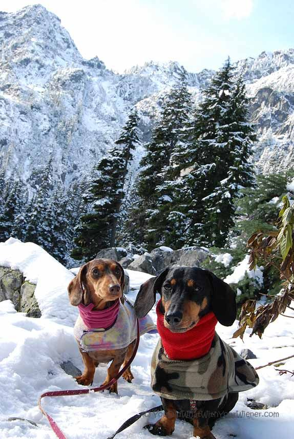 Tips for #Snowshoeing with #Dogs