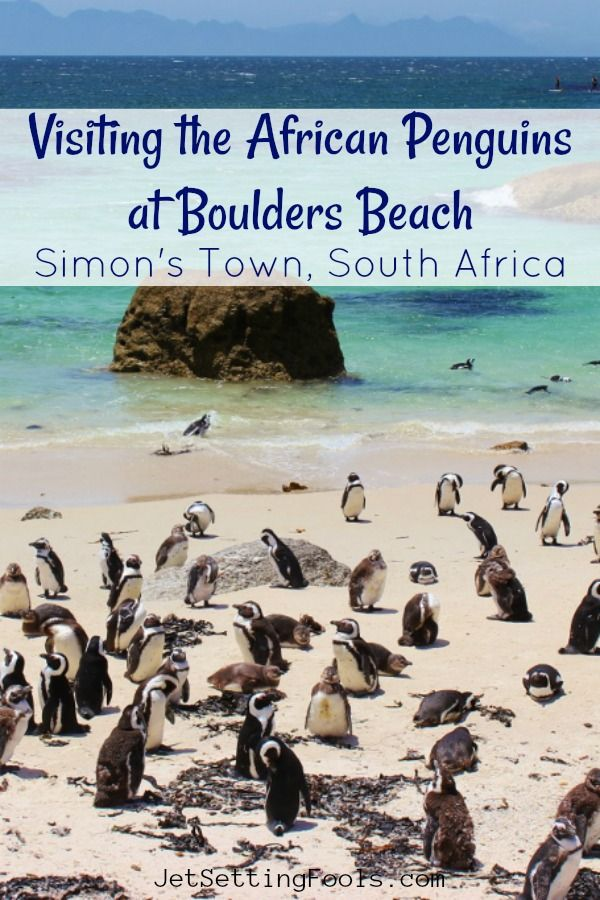 Up Images Of Penguins The Funny Little Birds Are More Often Thought Living In Cold Climates But At Boulders Beach Simon S Town South Africa
