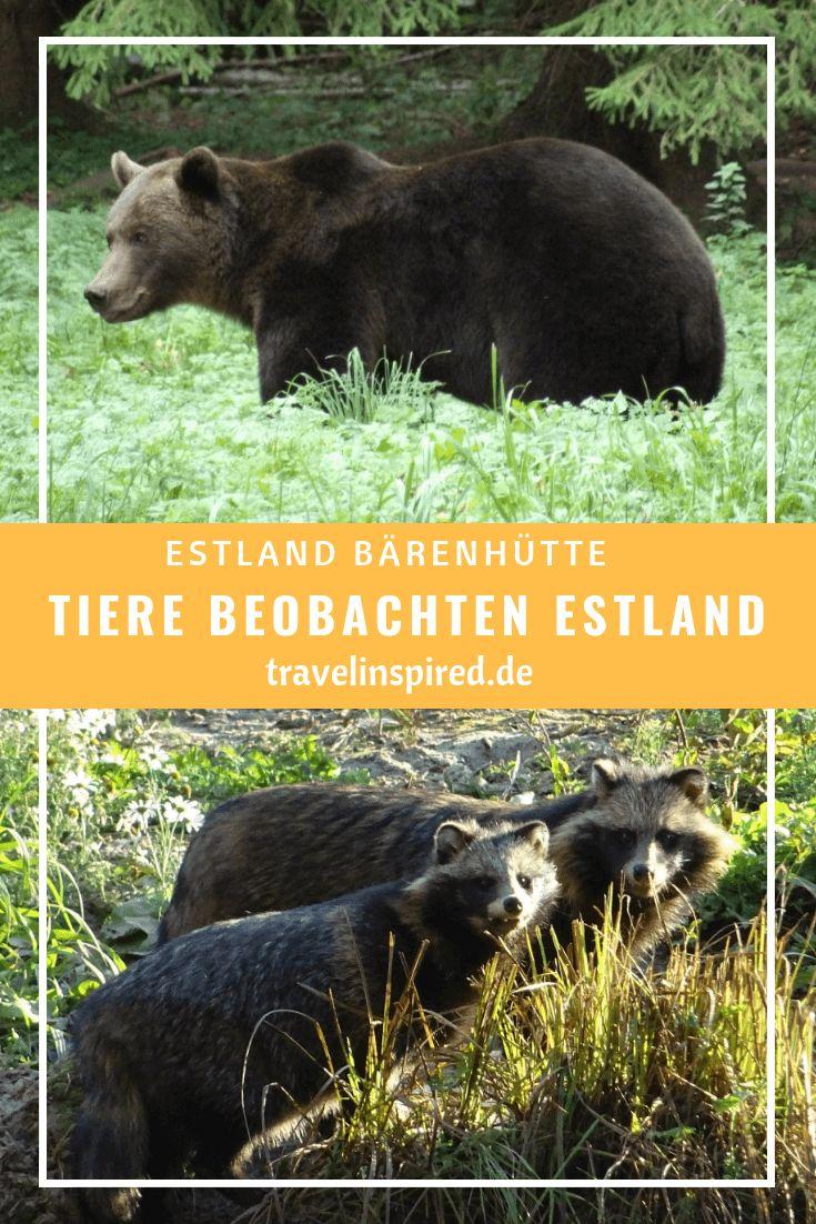 Bären beobachten in Estland - Baltikum Tipp | REISETIPPS ...