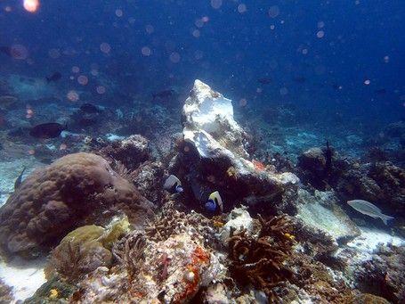 Ini Foto Karang Raja Ampat Yang Rusak Akibat Kapal Pesiar Inggris - http://darwinchai.com/traveling/ini-foto-karang-raja-ampat-yang-rusak-akibat-kapal-pesiar-inggris/
