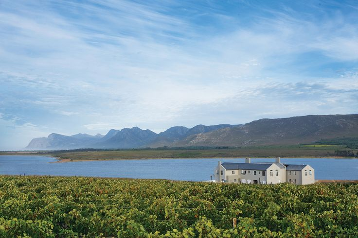 Beautiful view of our vineyards and the manor with mountains and the lagoon in the background.