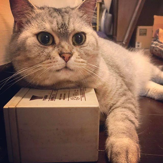 晚安😴💤💤 #taiwan #taipei #love #lala #cut #cat #girl #goodnight #photo #follow #followme #呆萌 #拉拉 #貓 #貓咪 #愛 #可愛 #肉 #晚安 #台北 #臺灣 #攝影